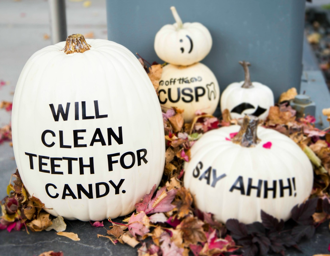 white dental themed pumpkins