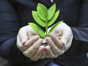 growing a small money tree