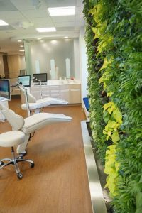 Gorton and Schmohl living plant feature wall